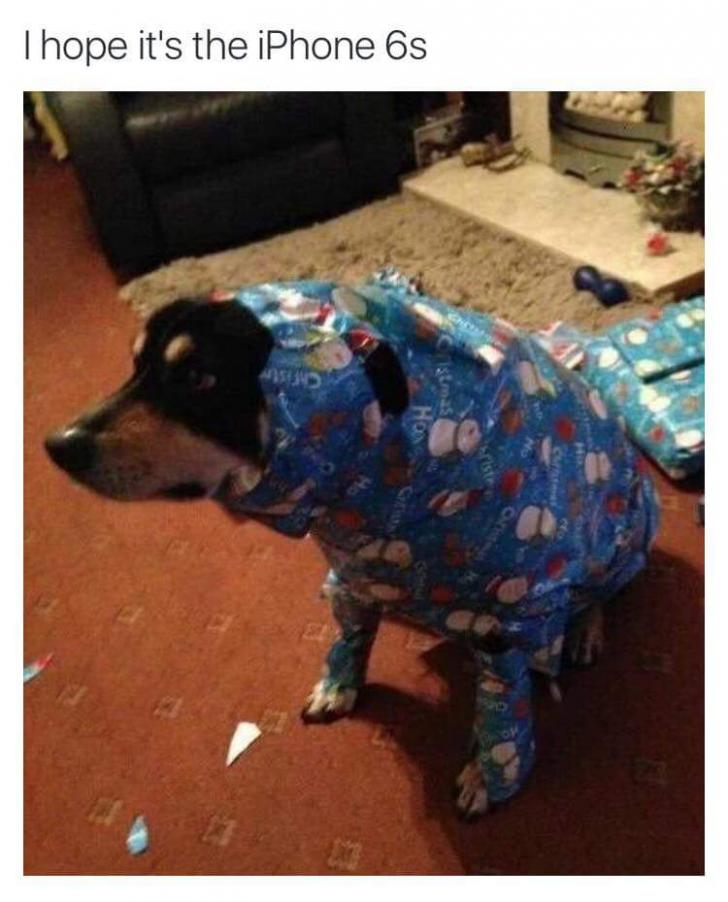 gift wrapped dog